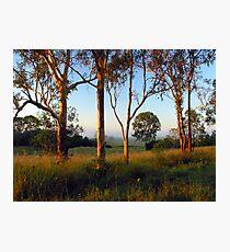 Dawn in the bush Photographic Print