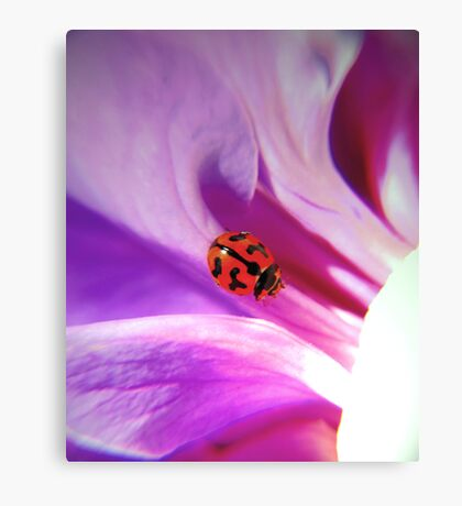 My ladybird Canvas Print