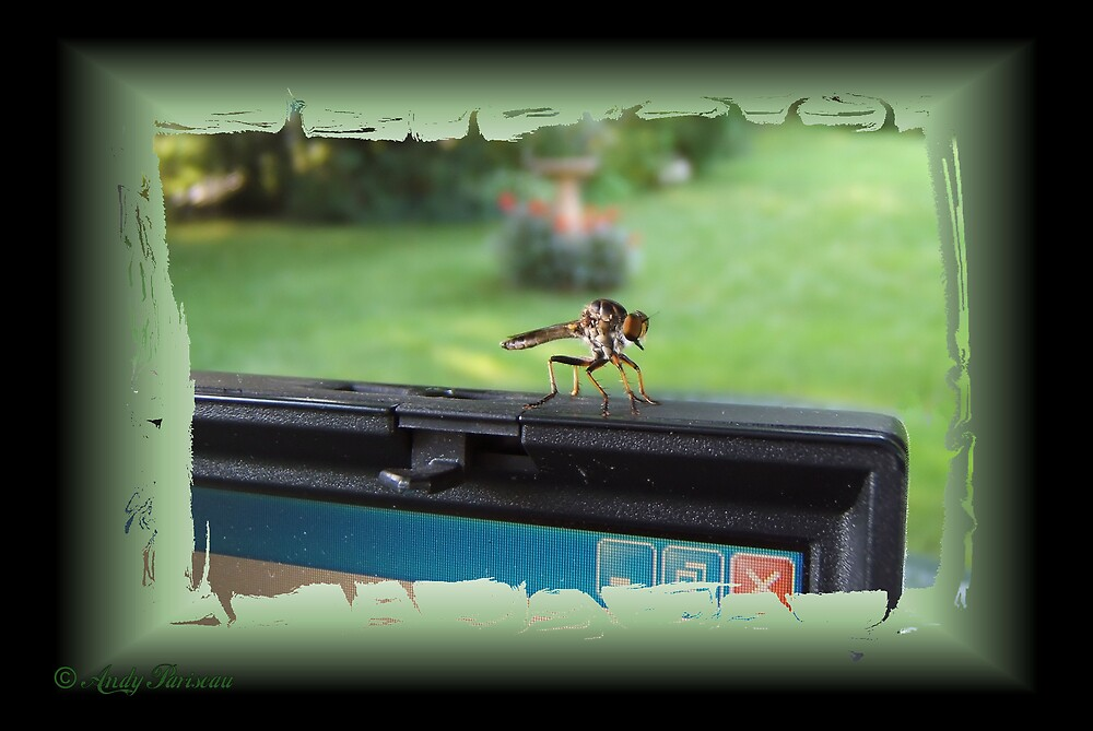 Bug on the System by Andy2302