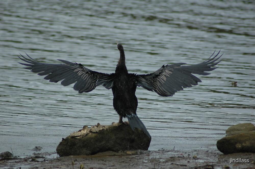 wing away by jindilass