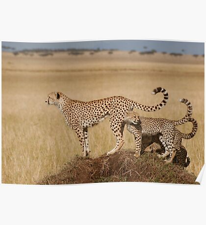 Cheetah Tails Poster
