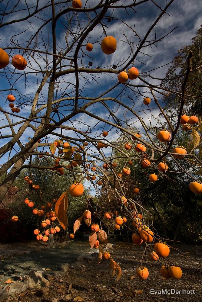Persimmon Tree by EvaMcDermott