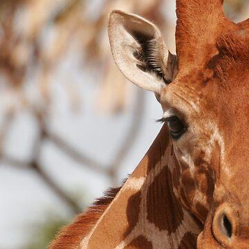 Giraffe by SteveBulford
