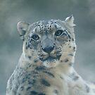 Snow Leopard Portrait by Sandy Keeton