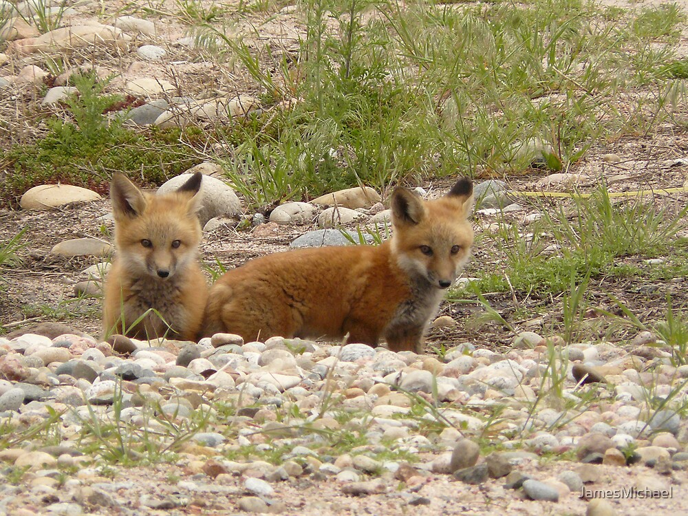 Baby Fox's by JamesMichael