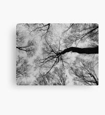 Trees # 2 Canvas Print