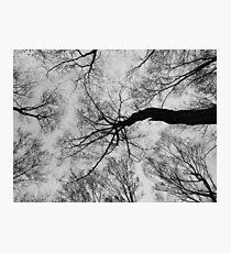 Trees # 2 Photographic Print
