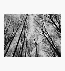 Trees # 1 Photographic Print