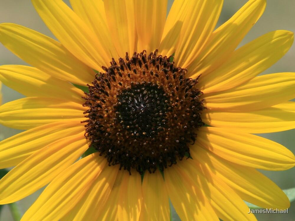 Yellow Flower by JamesMichael