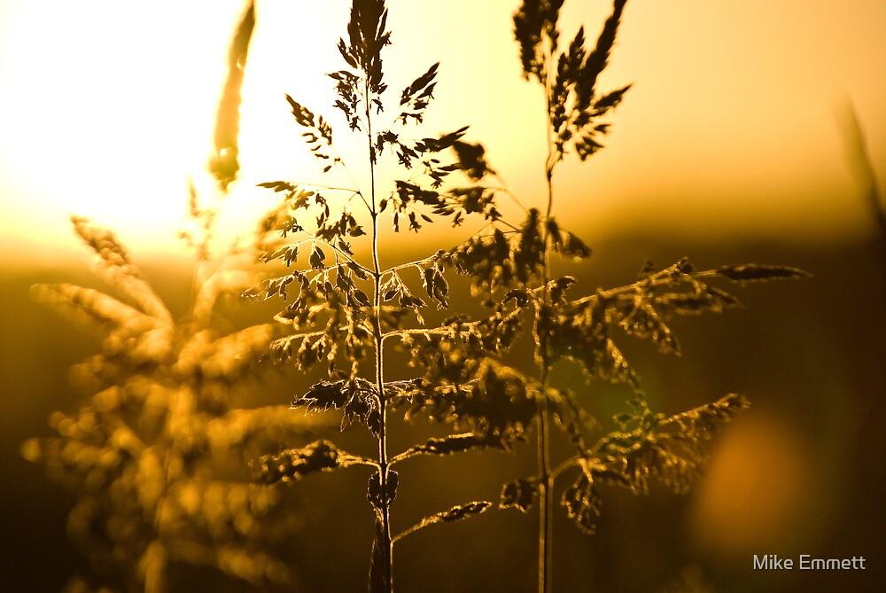 Golden haze - closeup by Mike Emmett