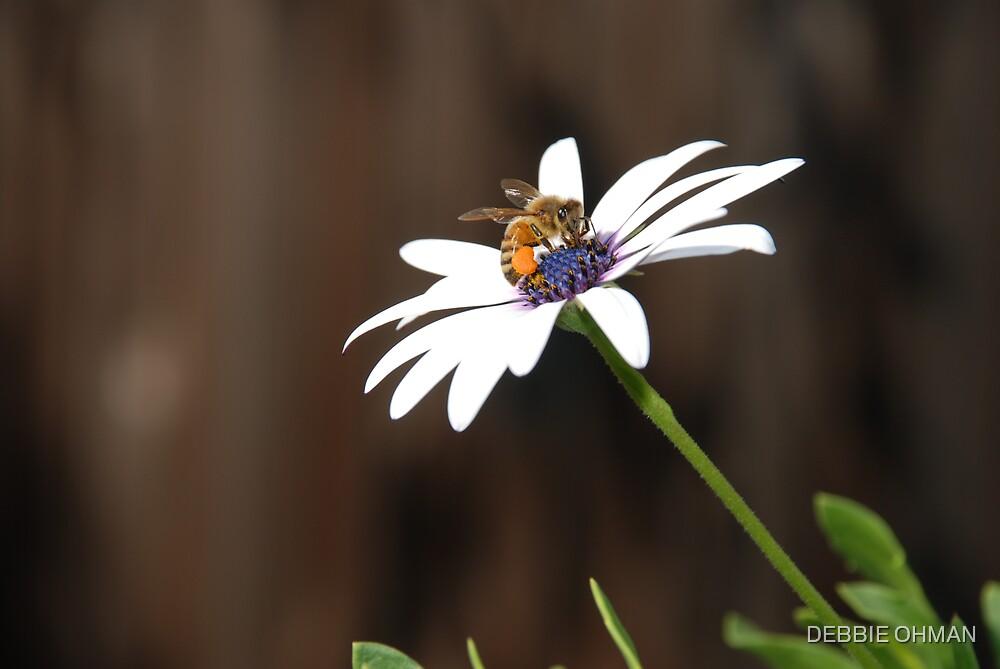 Just enjoying a flower by DEBBIE OHMAN