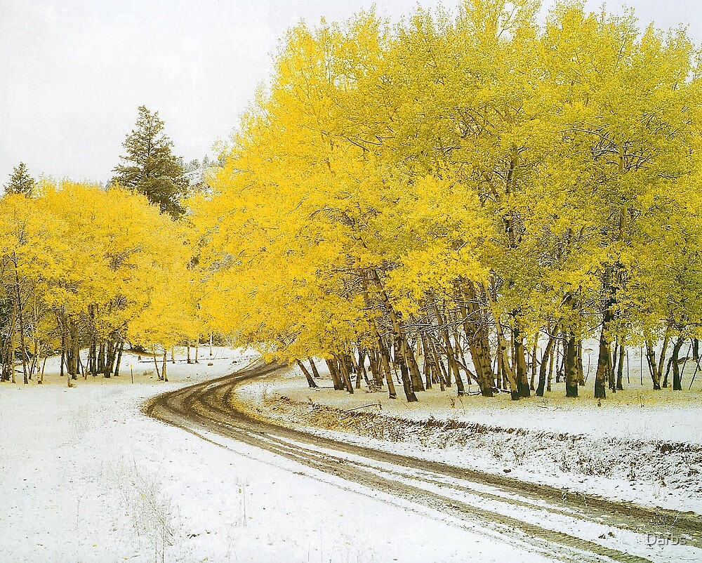 Aspens, first snow of autumn by Darbs