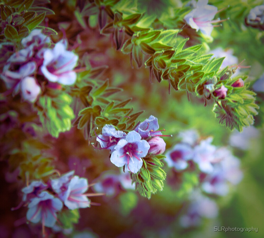 Those 70's Flowers by SLRphotography