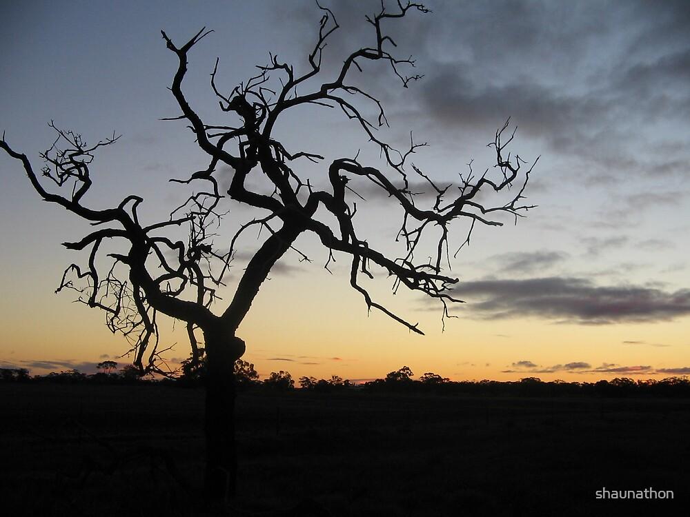 Dead Tree by shaunathon