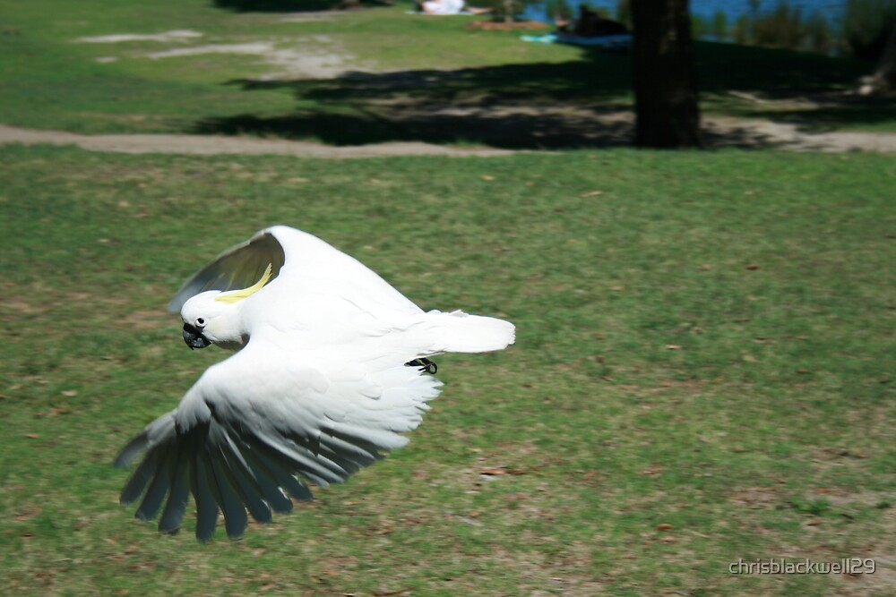in flight  by chrisblackwell29