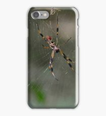 Banana Spider at De Leon Springs in FL iPhone Case/Skin