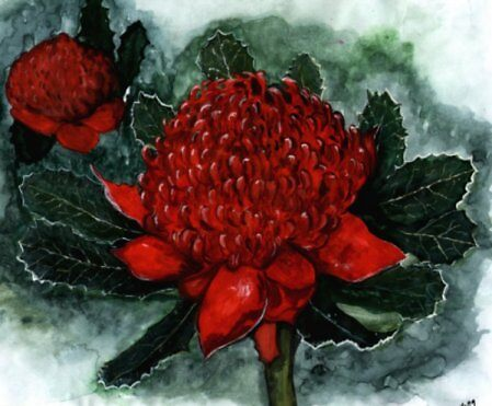 Waratah  (NSW's national flower) by sweetscent62
