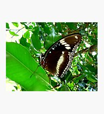 GREEN ATTRACTING SO MANY INSECTS. Photographic Print