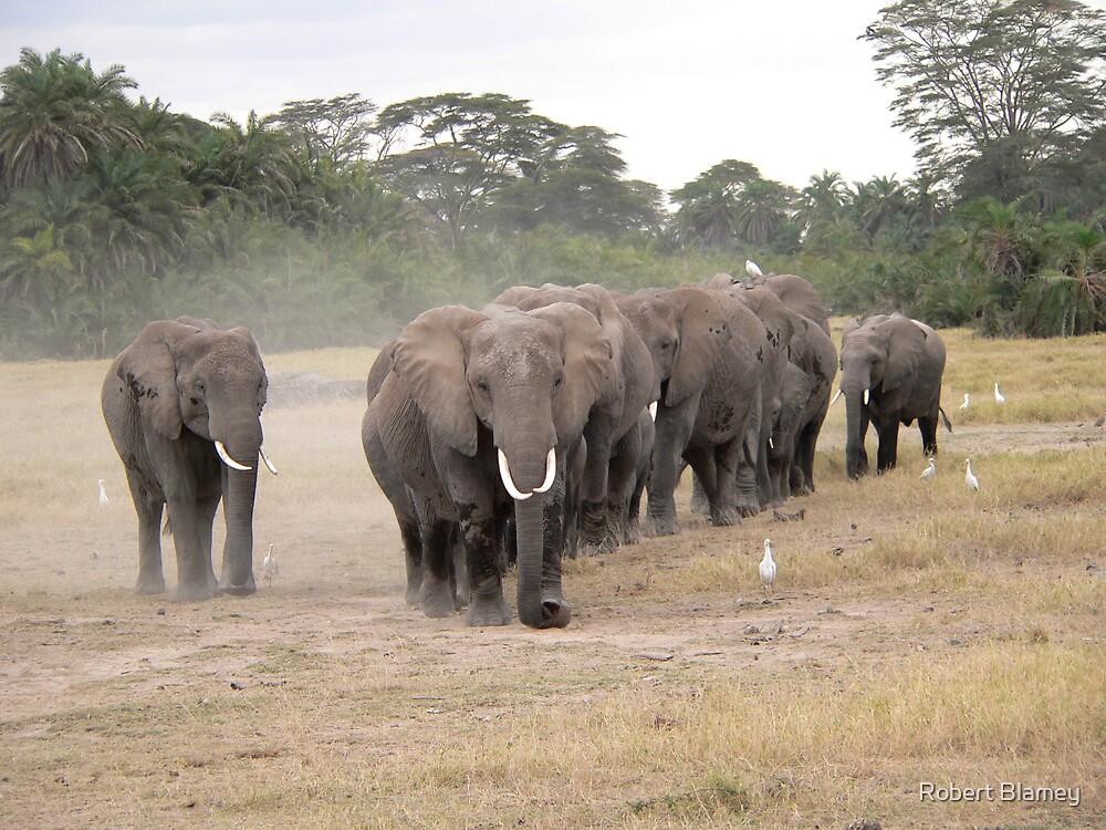 Elephants by Robert Blamey