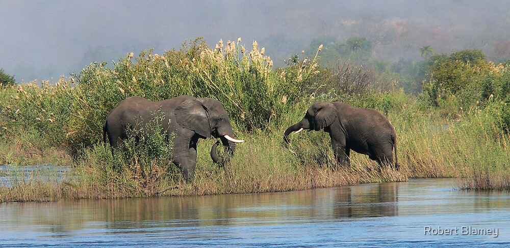 2 Elephants Africa by Robert Blamey