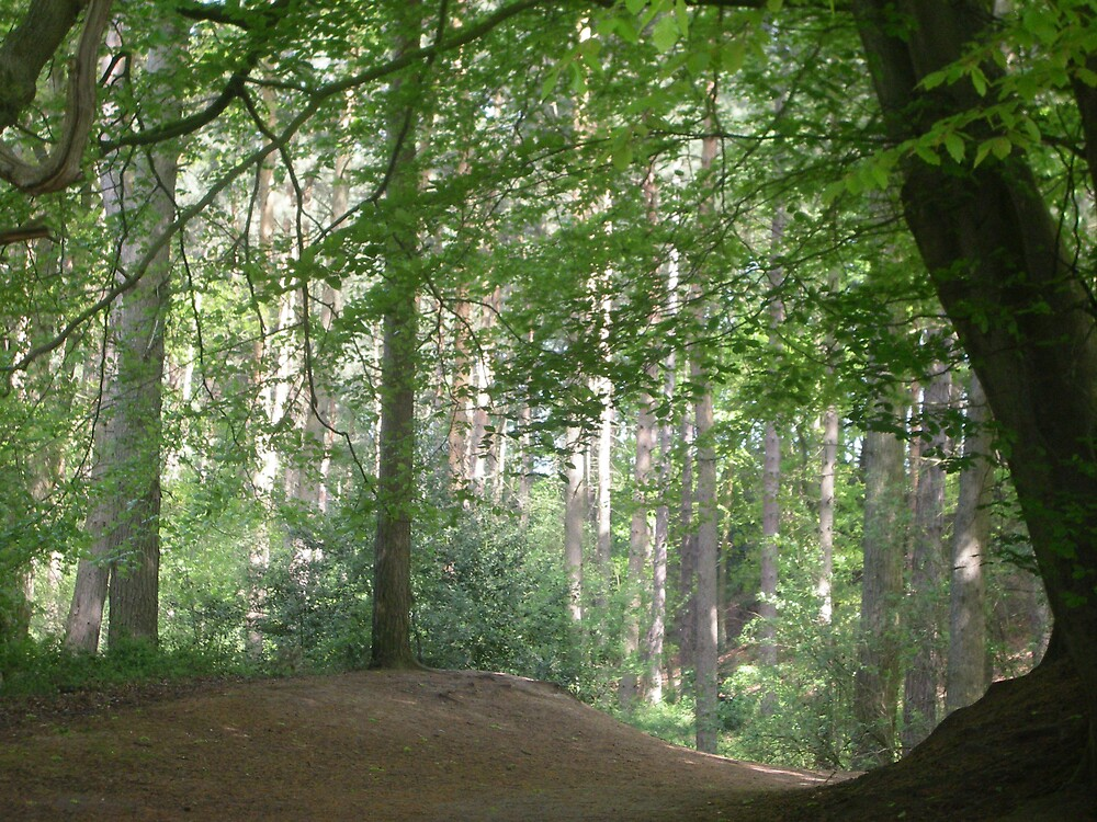 delamere forest by paulaallison
