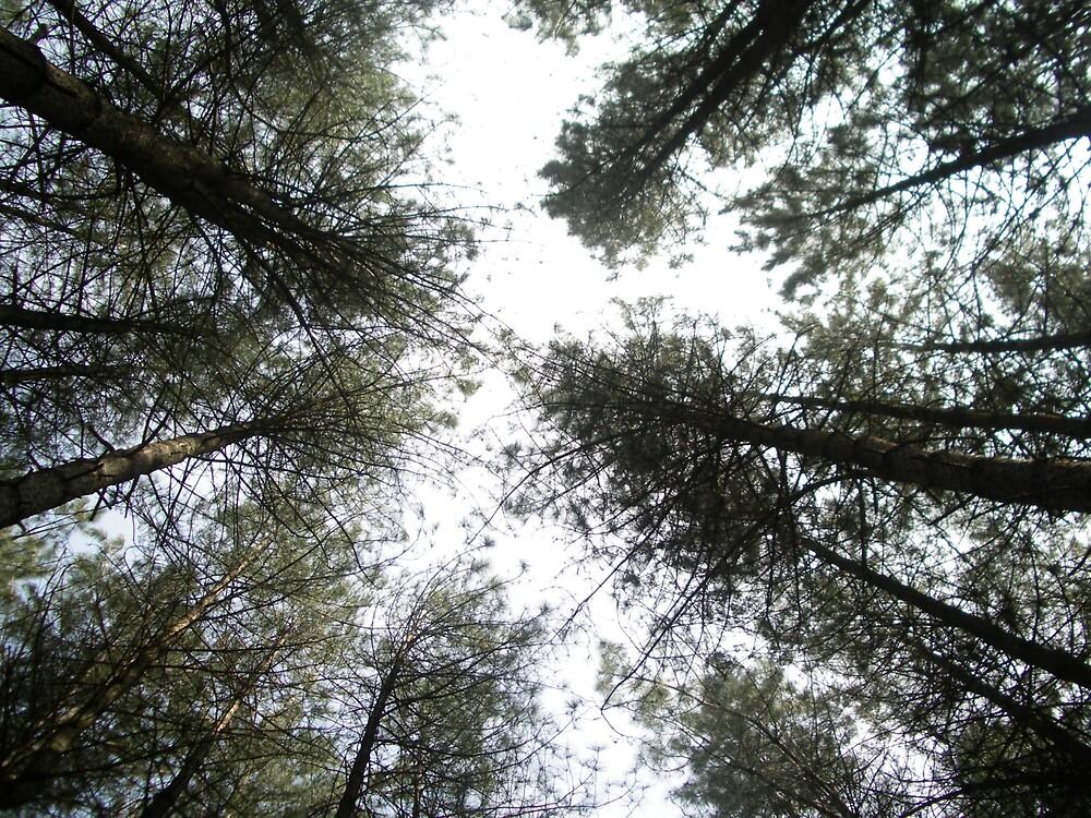 trees from below by paulaallison