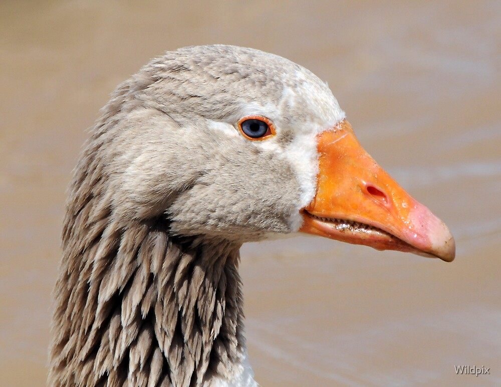 Goose for the Day by Wildpix