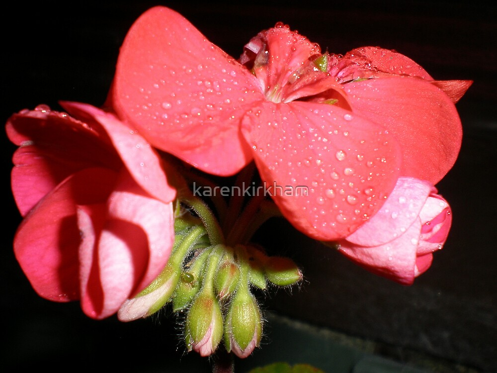 December Geranium by karenkirkham