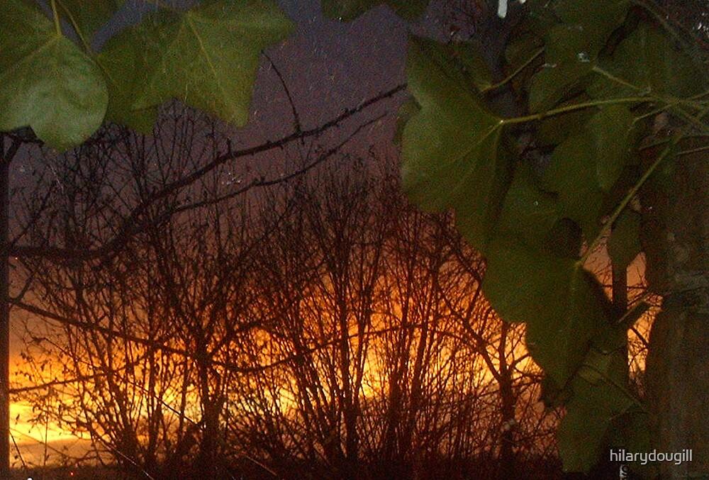 Burning bush by hilarydougill