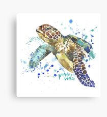 Sea Turtle Pura Vida Watercolor Canvas Print