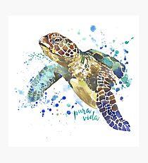 Sea Turtle Pura Vida Watercolor Photographic Print