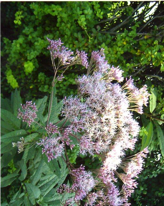 flower by tswanson