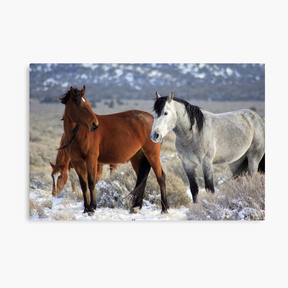 Snow Mustangs Canvas Print