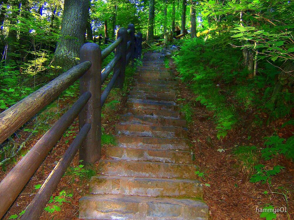 Follow the Brick Road by hammye01