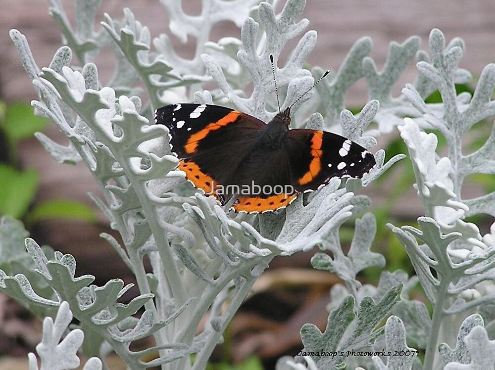 Dusty Butterfly by Jamaboop