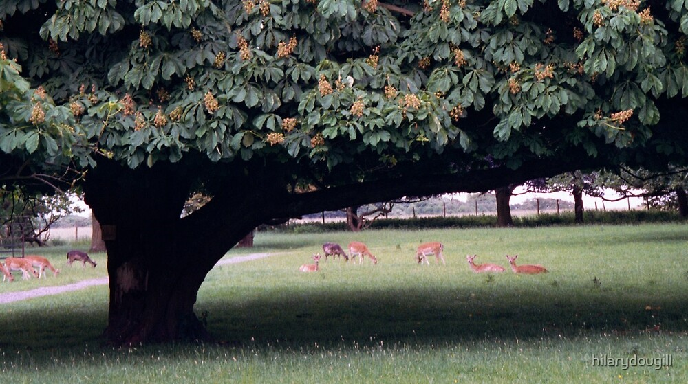 Tree giving shelter to the deer by hilarydougill