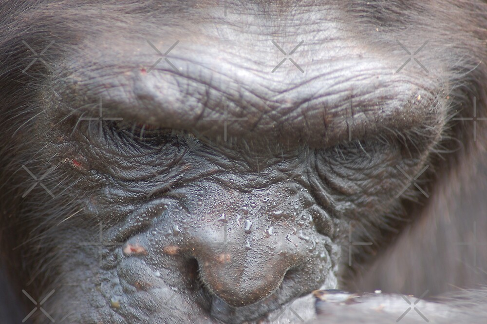 Chimp Brow by ApeArt