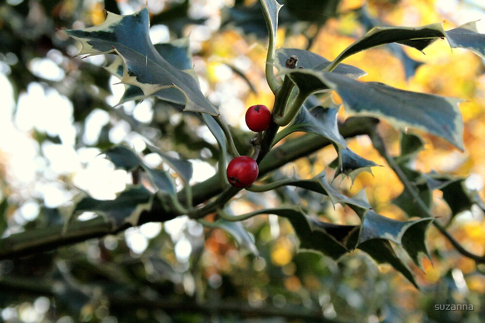Christmas Holly by suzanna