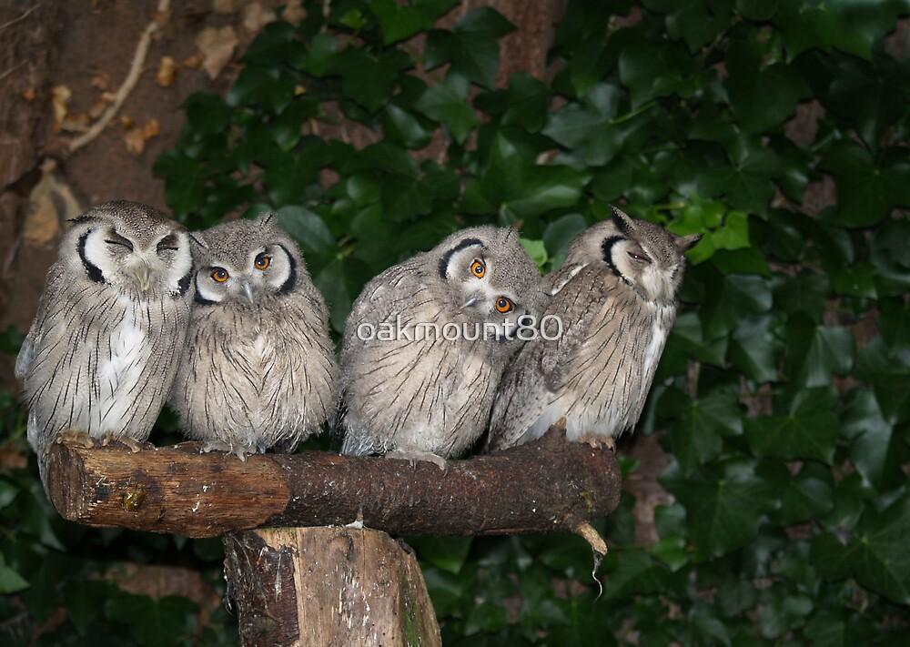 White Faced Scops Owls by oakmount80