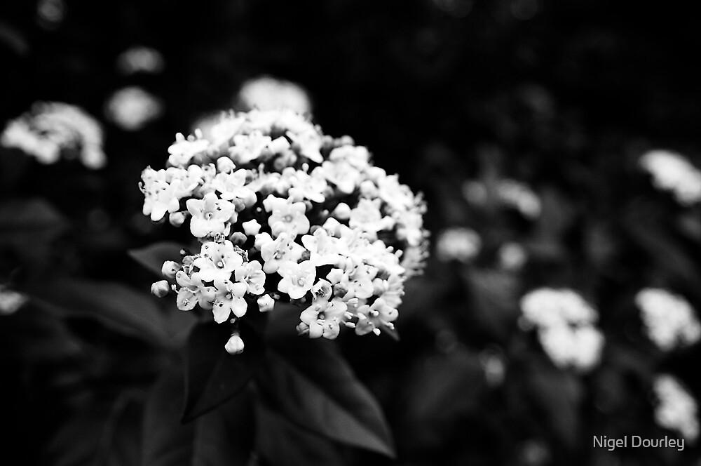 Bouquet by Nigel Dourley