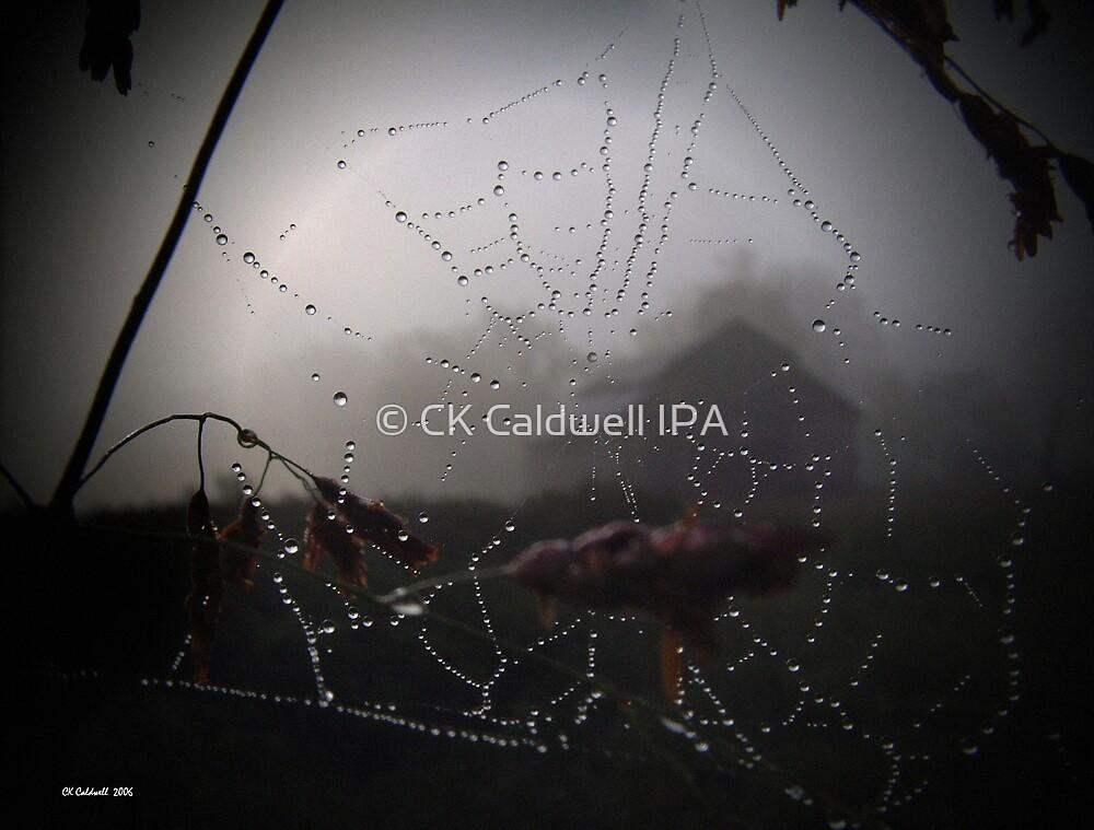 Misty Morning Sunrise by © CK Caldwell IPA