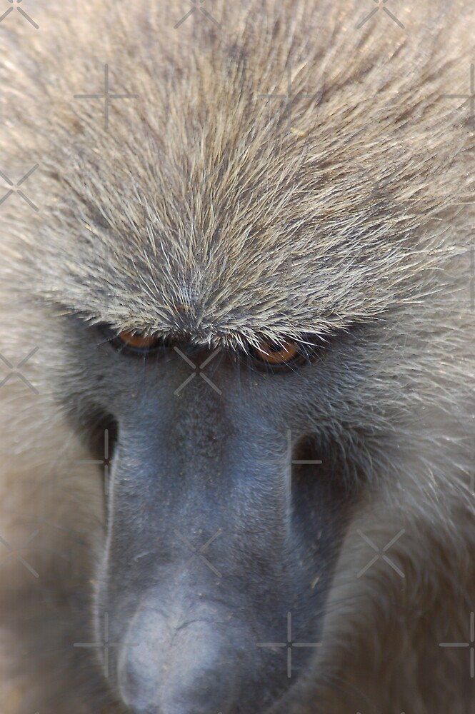 Baboon Stare by ApeArt