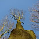 Tree by Andy Harris