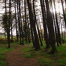 Celtic Woodland by Niamh Harmon