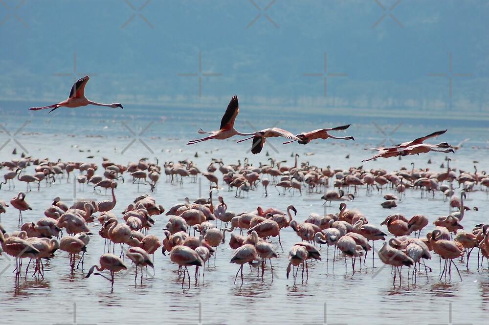 Flamingos in Flight by ApeArt
