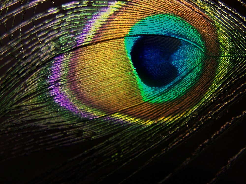 eye of the feather by M.  Photography