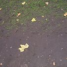 """Wiliam Blakes resting place""""The leaf marks the spot""""! by Mitchell  McLean"""