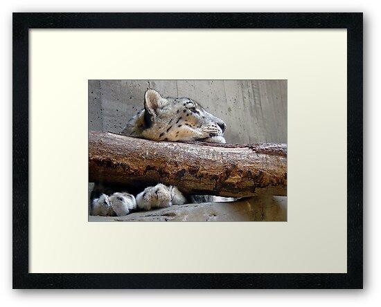 Resting Leopard by Jeff  Burns