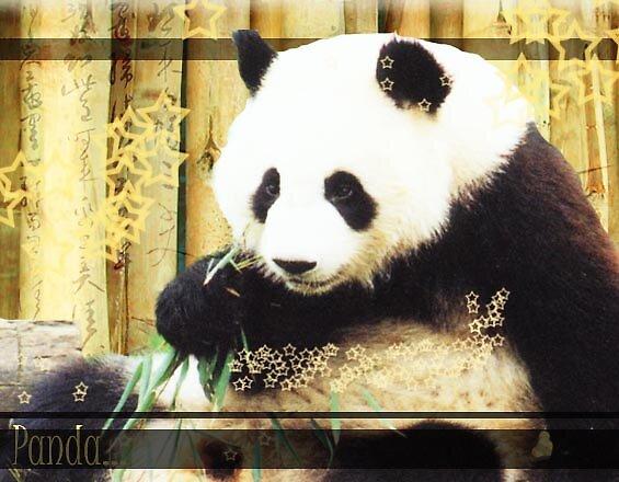 Panda by Hannah2991