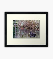 Duck at Heart Shaped Pond Framed Print
